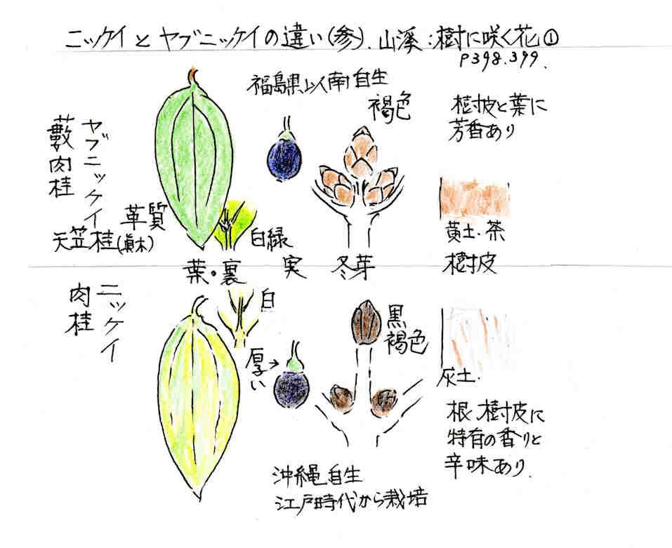 f:id:chuumeikun:20170402210119j:plain