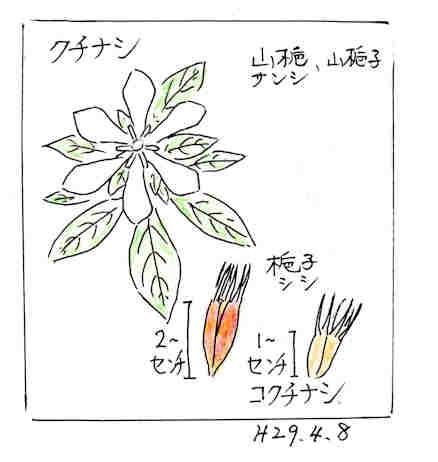 f:id:chuumeikun:20170409110301j:plain