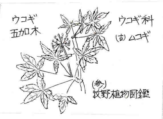 f:id:chuumeikun:20170424002850j:plain