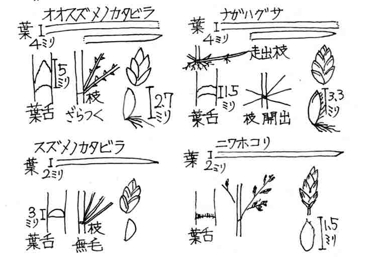 f:id:chuumeikun:20170428060725j:plain