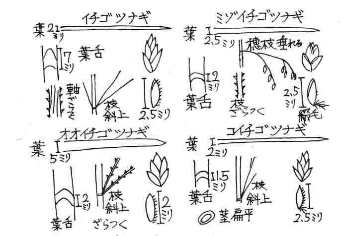 f:id:chuumeikun:20170428060742j:plain