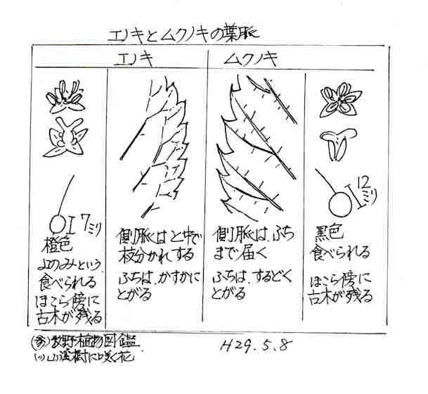 f:id:chuumeikun:20170519003605j:plain