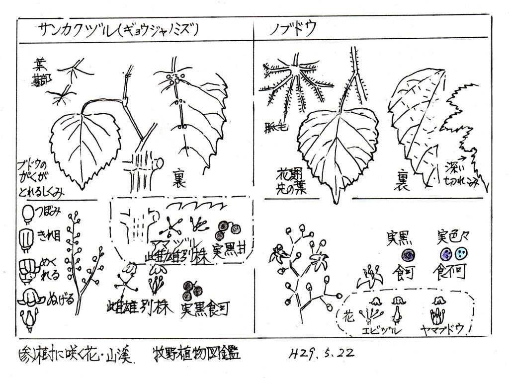 f:id:chuumeikun:20170524054837j:plain