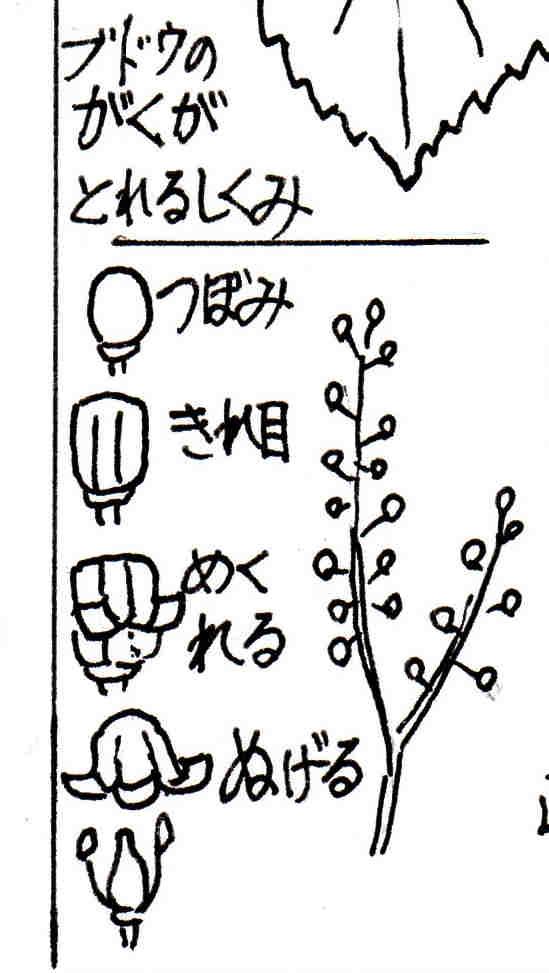 f:id:chuumeikun:20170524055246j:plain