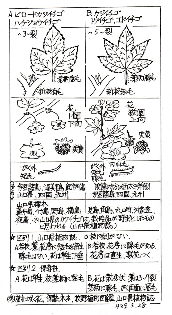 f:id:chuumeikun:20170529005417j:plain