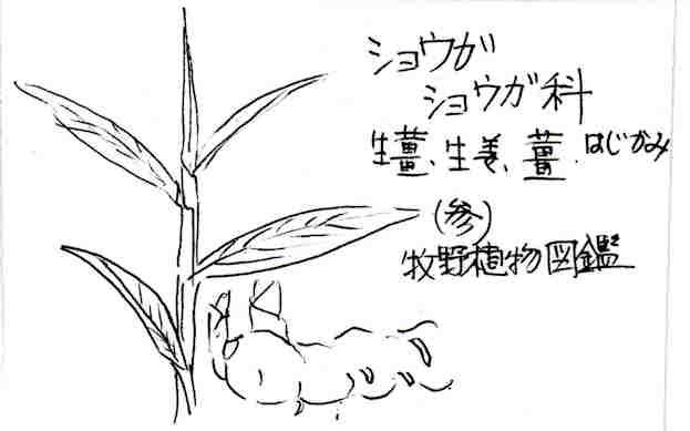 f:id:chuumeikun:20170611205159j:plain