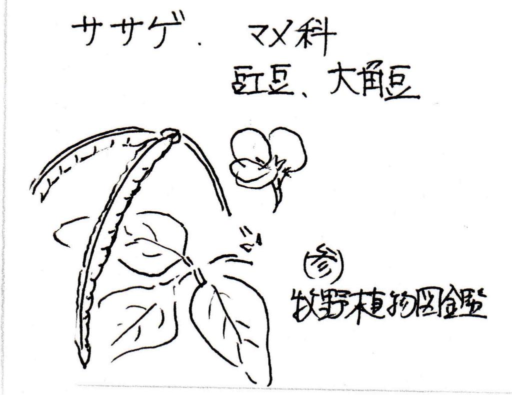 f:id:chuumeikun:20170621085059j:plain