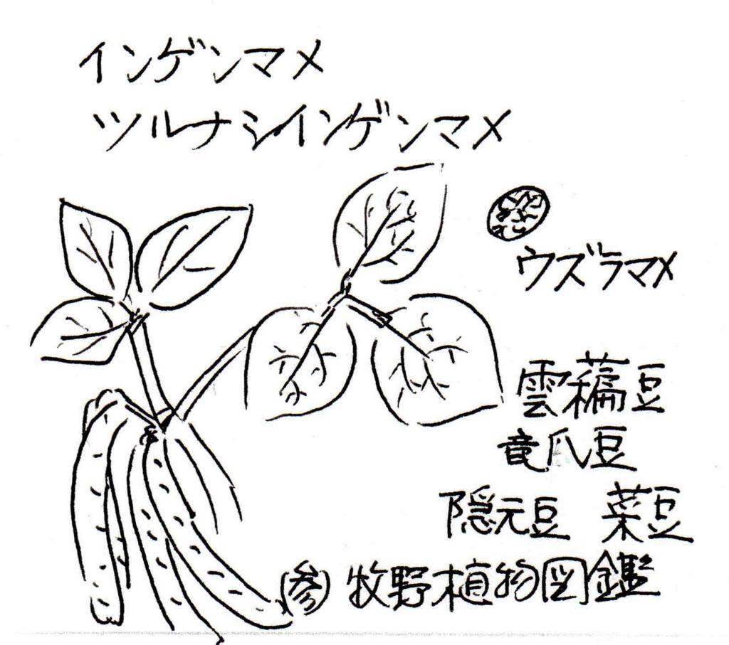 f:id:chuumeikun:20170621085118j:plain