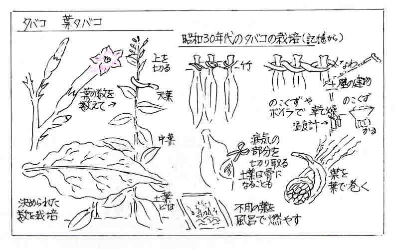 f:id:chuumeikun:20170627131208j:plain
