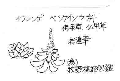 f:id:chuumeikun:20170627132318j:plain