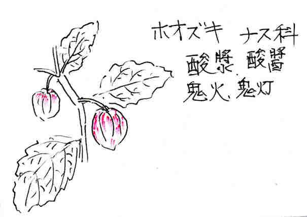 f:id:chuumeikun:20170705010320j:plain