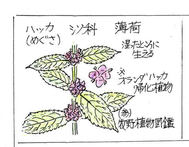 f:id:chuumeikun:20170705010451j:plain