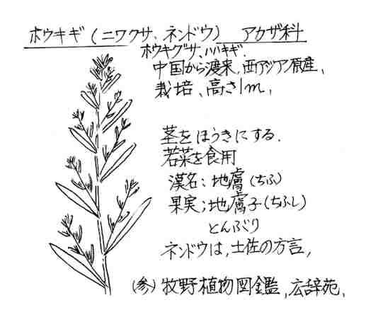 f:id:chuumeikun:20170709095808j:plain