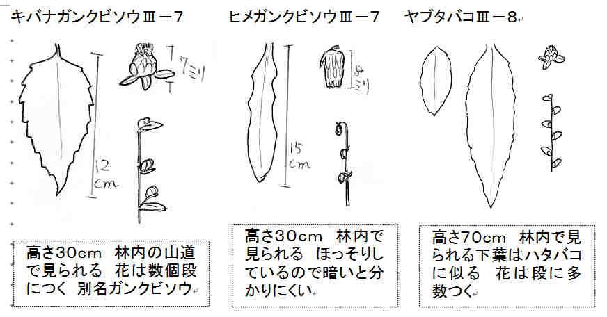 f:id:chuumeikun:20170711054523j:plain