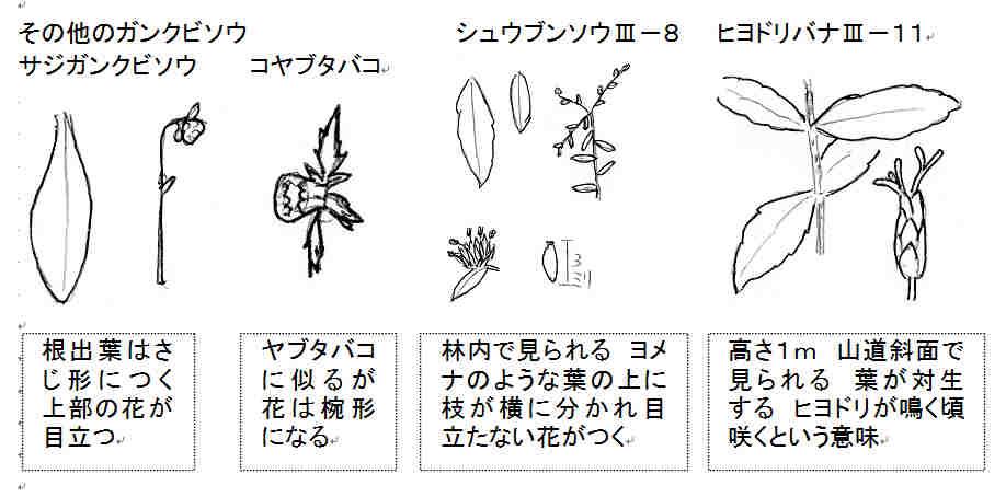 f:id:chuumeikun:20170711054538j:plain