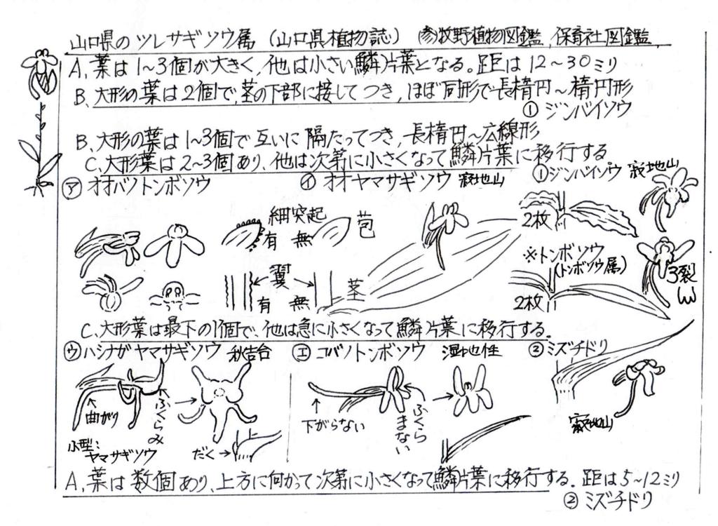 f:id:chuumeikun:20170713061208j:plain