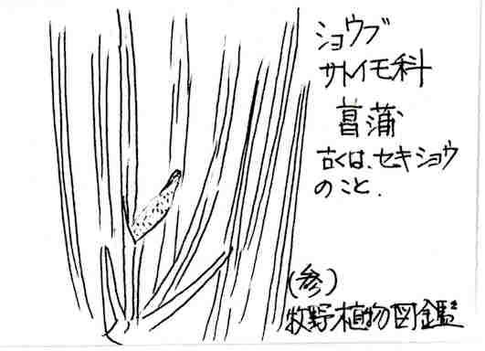 f:id:chuumeikun:20170725012120j:plain