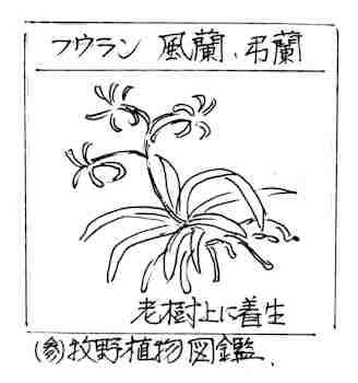 f:id:chuumeikun:20170725013152j:plain