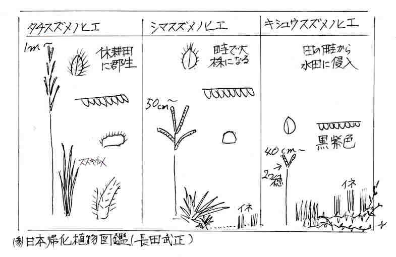 f:id:chuumeikun:20170727194044j:plain