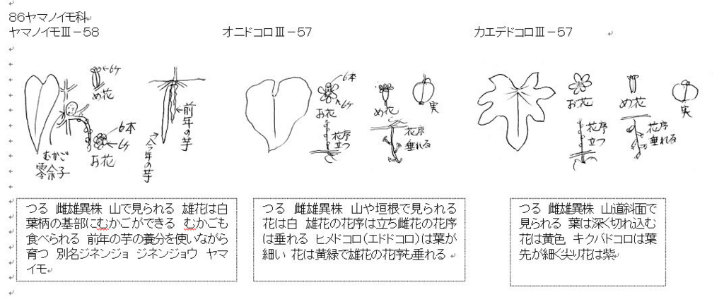 f:id:chuumeikun:20170728200356j:plain