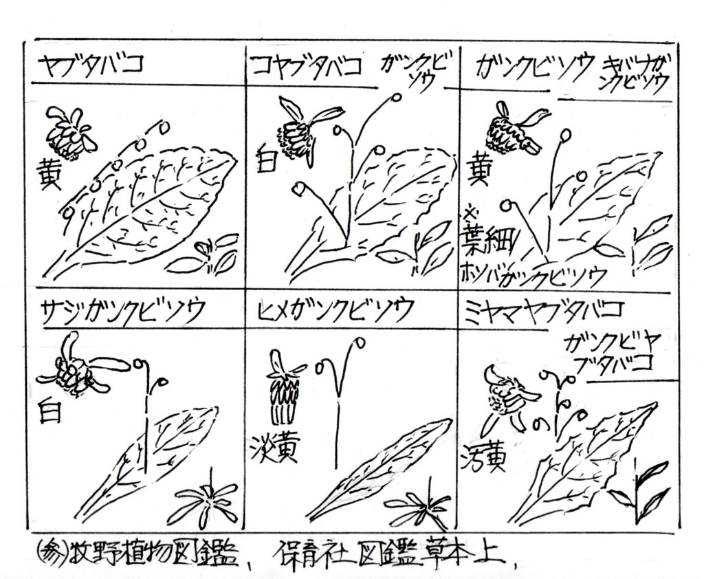 f:id:chuumeikun:20170728200529j:plain