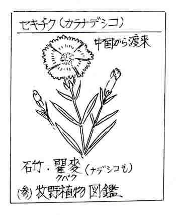 f:id:chuumeikun:20170731062510j:plain