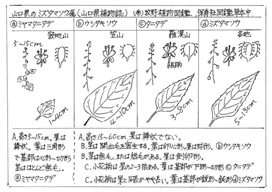 f:id:chuumeikun:20170803203751j:plain