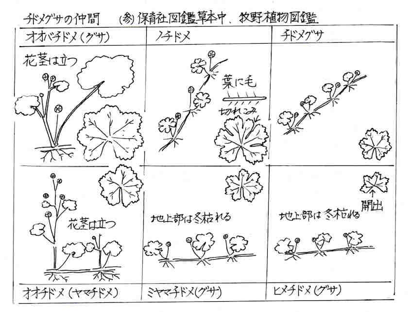 f:id:chuumeikun:20170804185831j:plain