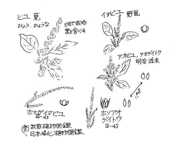 f:id:chuumeikun:20170807205710j:plain