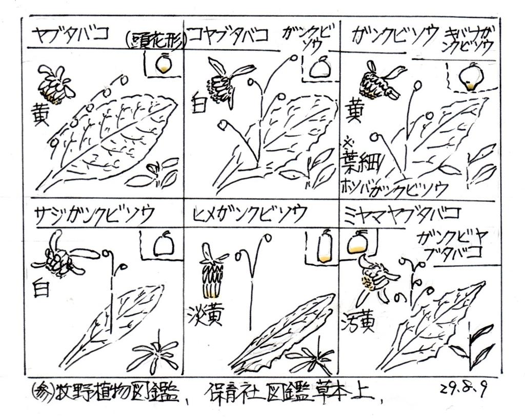 f:id:chuumeikun:20170810192524j:plain