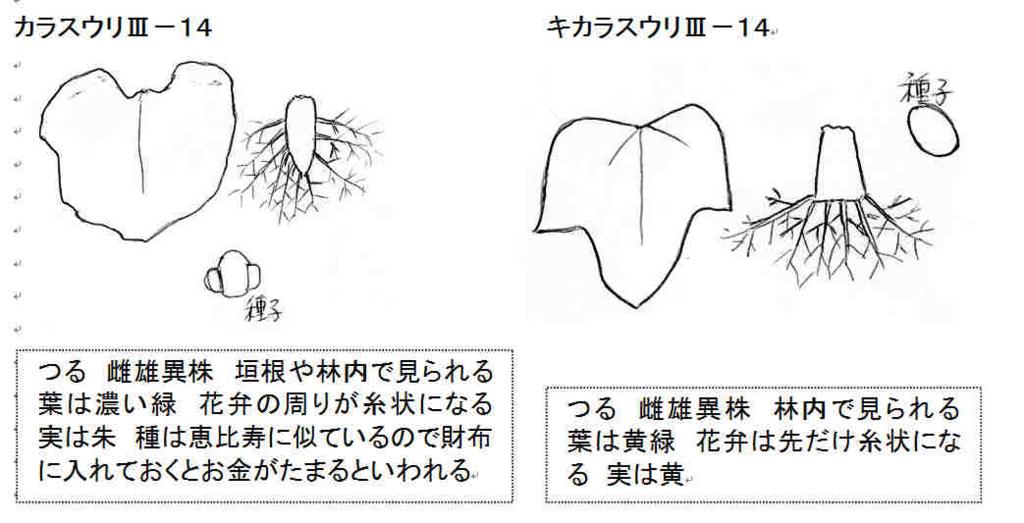 f:id:chuumeikun:20170811034011j:plain