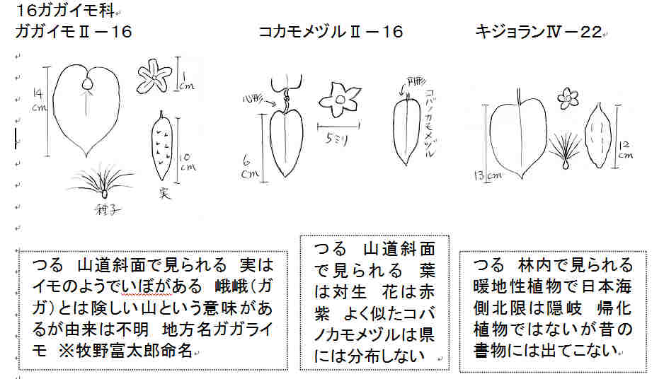 f:id:chuumeikun:20170811034117j:plain