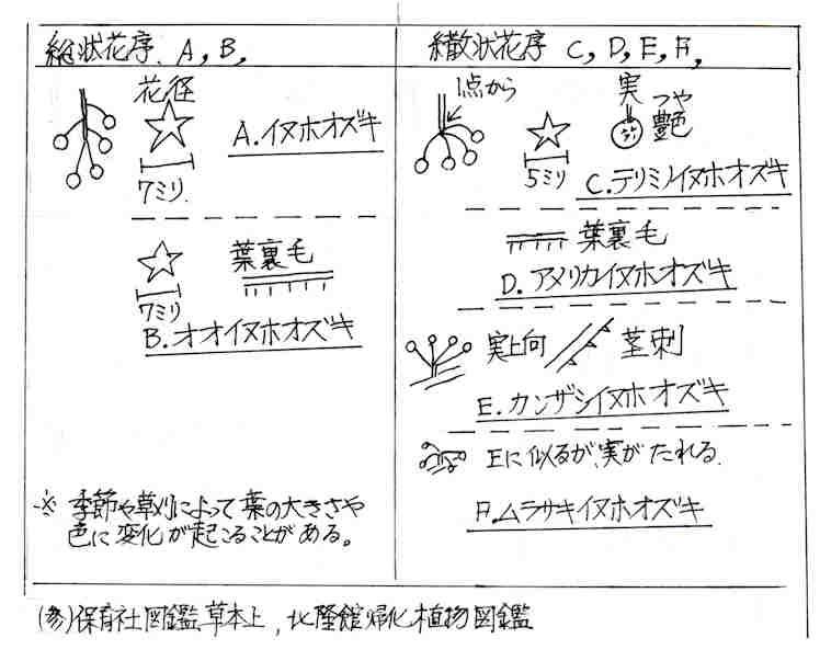 f:id:chuumeikun:20170812053013j:plain