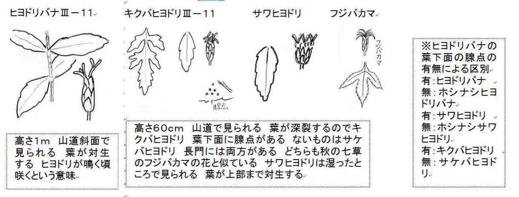 f:id:chuumeikun:20170812053059j:plain
