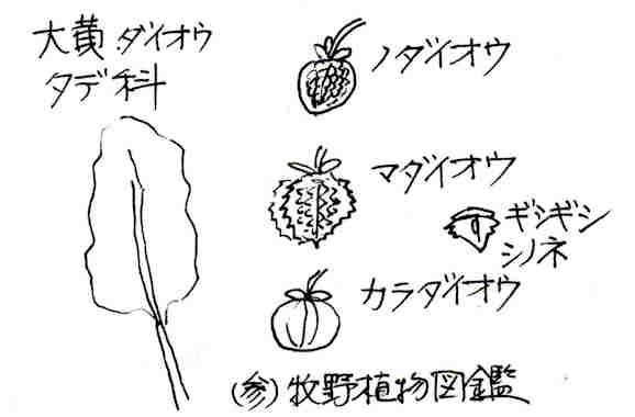 f:id:chuumeikun:20170814063830j:plain