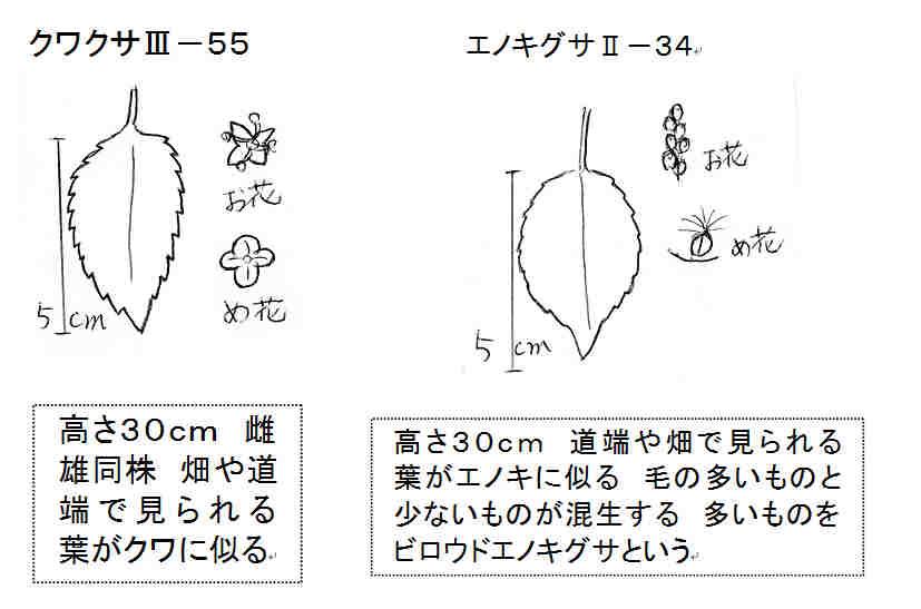 f:id:chuumeikun:20170821232806j:plain