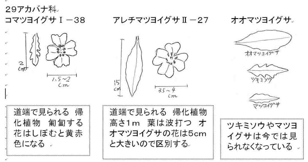 f:id:chuumeikun:20170821232927j:plain