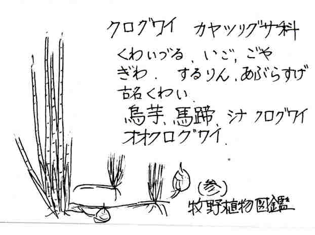 f:id:chuumeikun:20170829182008j:plain