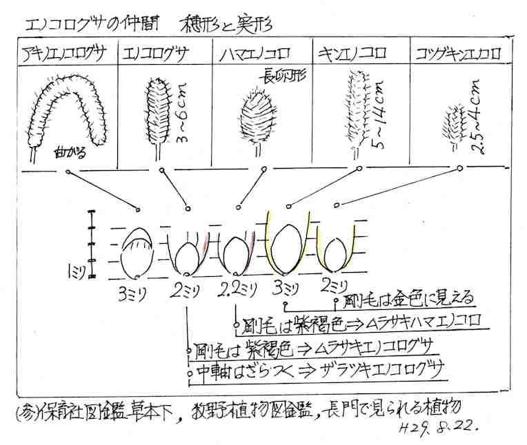 f:id:chuumeikun:20170901185947j:plain