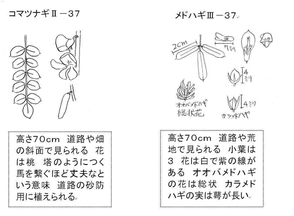 f:id:chuumeikun:20170911055728j:plain