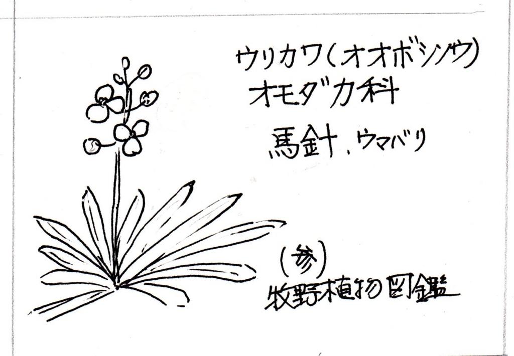 f:id:chuumeikun:20170913001929j:plain