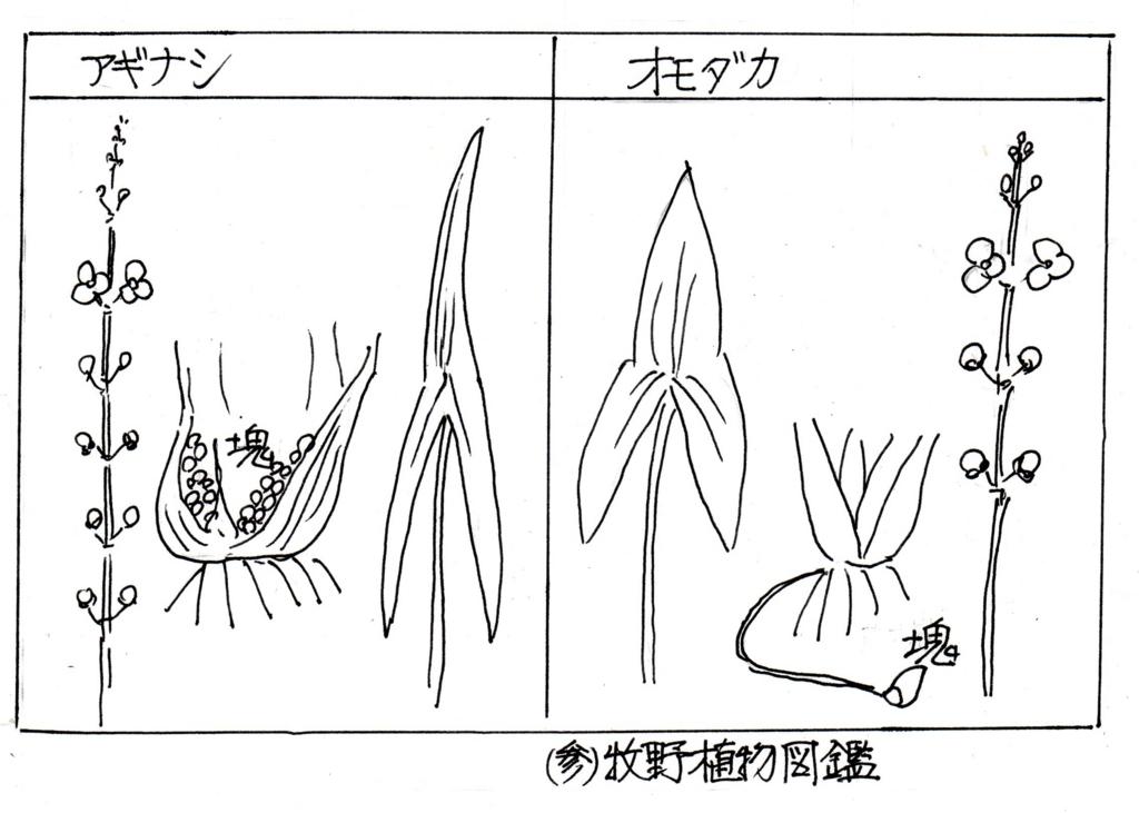 f:id:chuumeikun:20170913002014j:plain