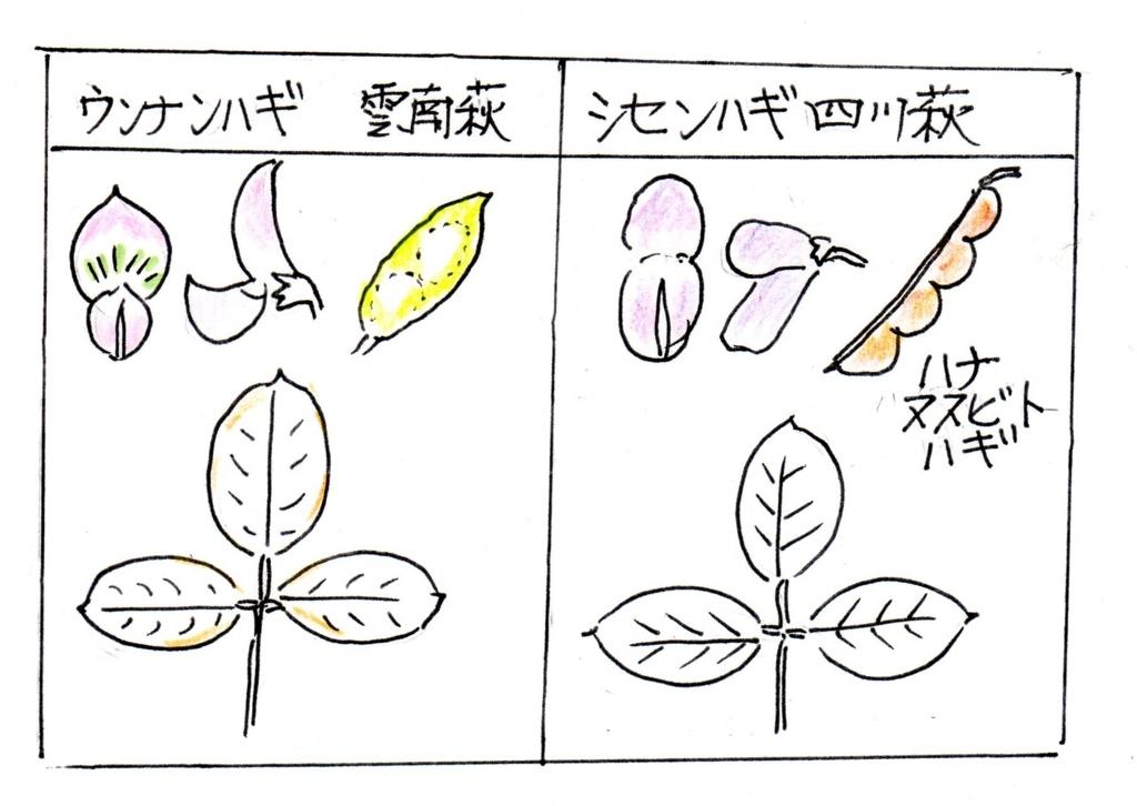 f:id:chuumeikun:20170914003520j:plain