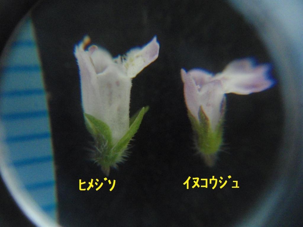 f:id:chuumeikun:20170920003618j:plain