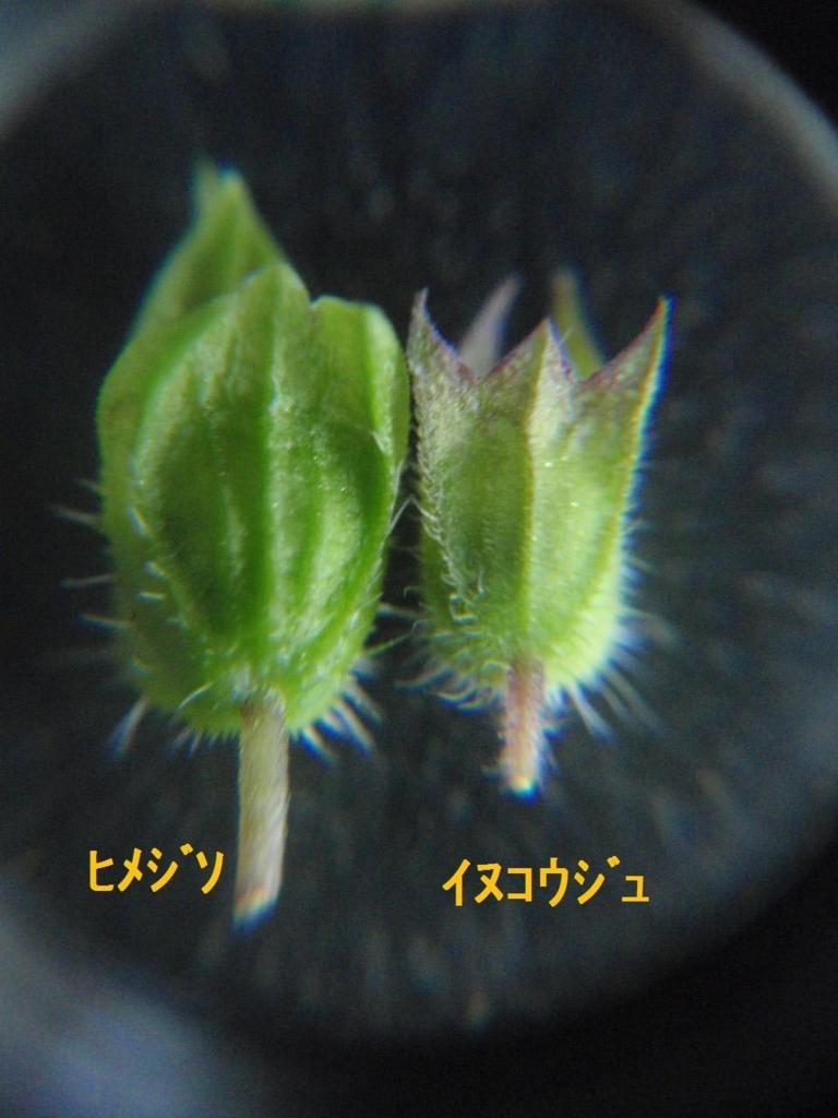 f:id:chuumeikun:20170920003635j:plain