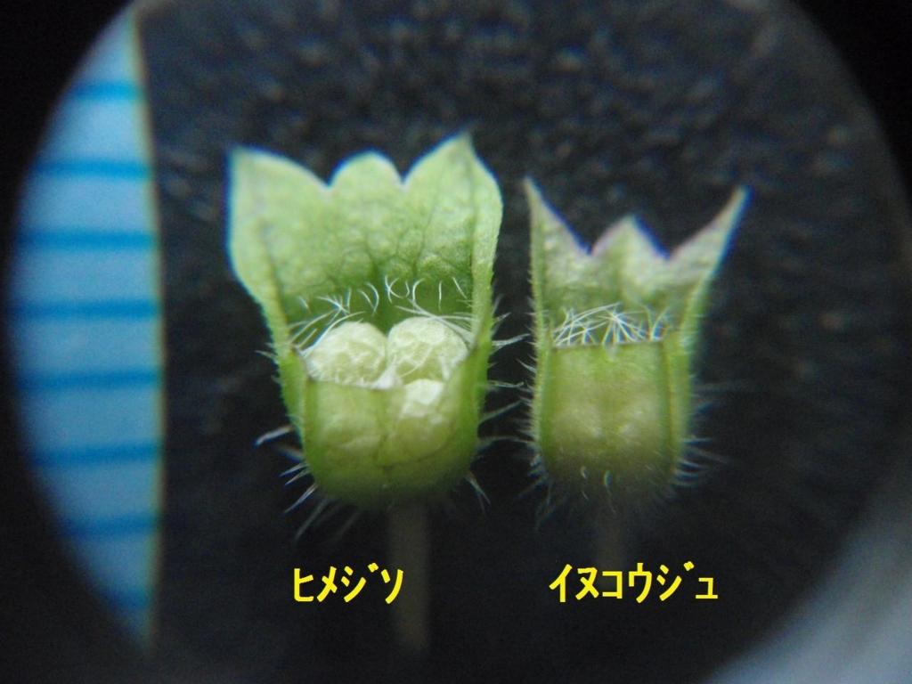 f:id:chuumeikun:20170920003654j:plain