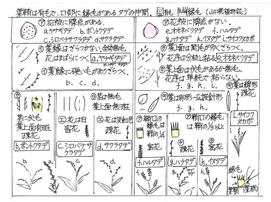f:id:chuumeikun:20170921001808j:plain