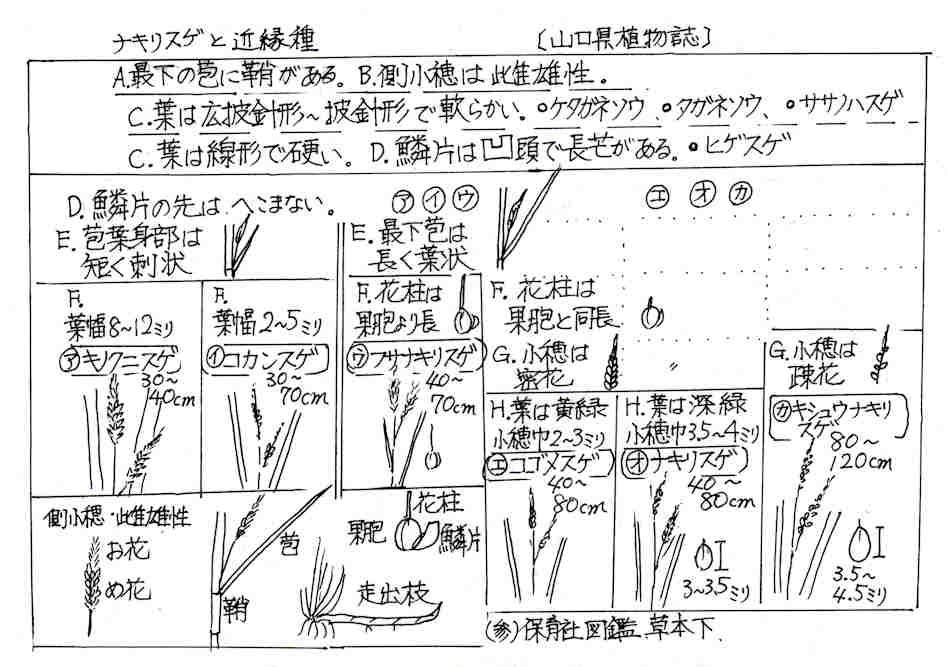 f:id:chuumeikun:20170925001006j:plain