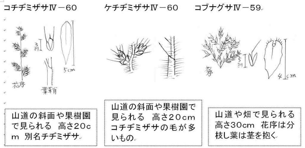 f:id:chuumeikun:20170925001215j:plain