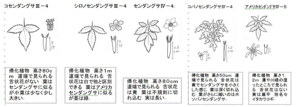 f:id:chuumeikun:20170928215845j:plain